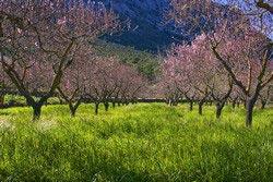 Uw vakantie in Agriturismo Spanje