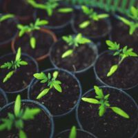 Houten plantenbak kopen